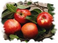 Натуральные витамины, минералы и биофлавоноиды